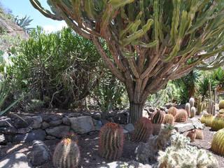 Jard n bot nico canario viera y clavijo garten in las palmas - Jardin botanico canario ...