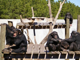 Chimpanzee Discovery Day © Shreveport-Bossier: Louisiana's Other Side