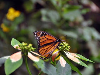 Victoria Butterfly Gardens Tierpark In Brentwood Bay