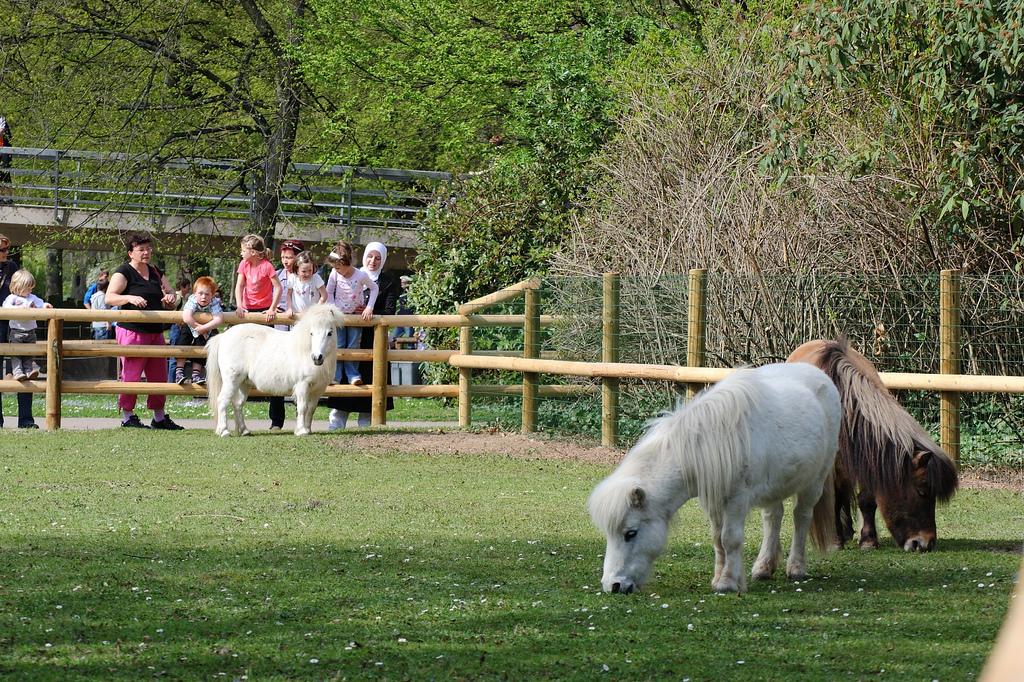Ticket Zoo Karlsruhe