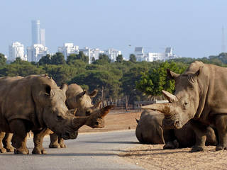 Ramat Gan Safari © Zoological Center Tel Aviv