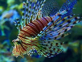 Tropen aquarium hagenbeck aquarium in hamburg for Bilder teichfische