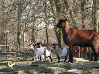 Eilenburger Tierpark Tierpark In Eilenburg Parkscout De
