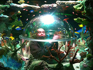Watch video· The Phoenix-area mega aquarium opened amid much fanfare in fall A sea turtle swims at OdySea Aquarium near Scottsdale on Sept. 7, the aquarium has not offered any coupons .