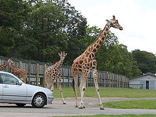 Hotels Near Woburn Safari Park
