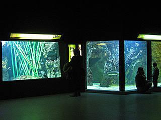 aquarium du grand lyon aquarium in la mulati 232 re