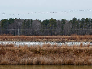 Blackwater National Wildlife Refuge, Cambridge, MD © sneakerdog