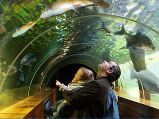 Aquarium of the Lakes © Aquarium of the Lakes